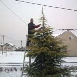 uređivanje cedra